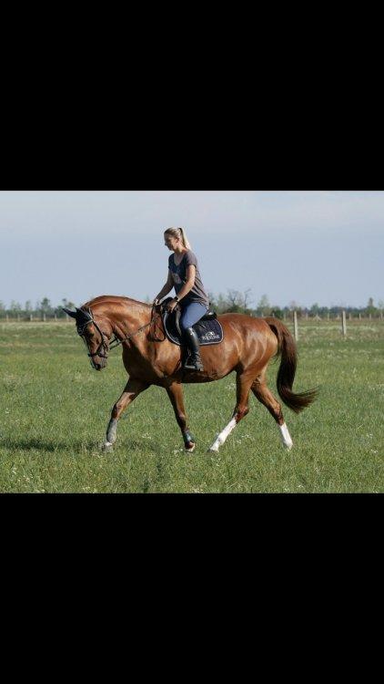 Nádej pre kone